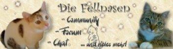 Eine Community rund um Katzen - mit Chat, Fotoalben, Foto des Tages, Katzentagebüchern, Online-Spielen und vielen netten Leuten!